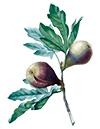 figs-101