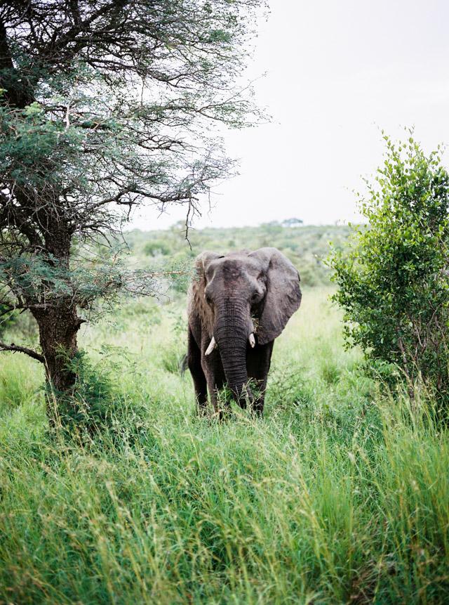 film photography africa kruger parkfilm photography africa kruger parkfilm photography africa kruger park