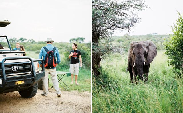 film photography africa kruger park